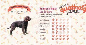 american water spaniel scheda razza