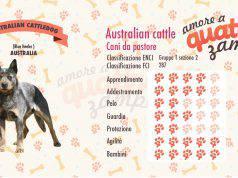 australian cattle dog scheda razza