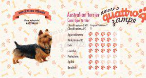 australian terrier scheda razza