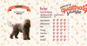 barbet scheda razza