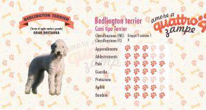 Bedlington terrier scheda razza