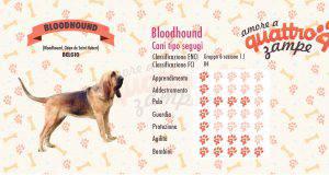 Bloodhound scheda razza