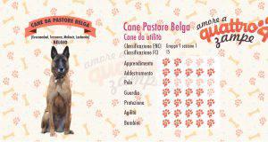 Cane da pastore belga scheda razza