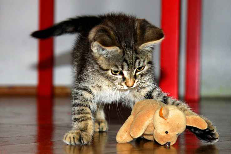Gatto dolce (Foto Pixabay)