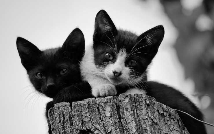 Gattini incuriositi (Foto Pixabay)