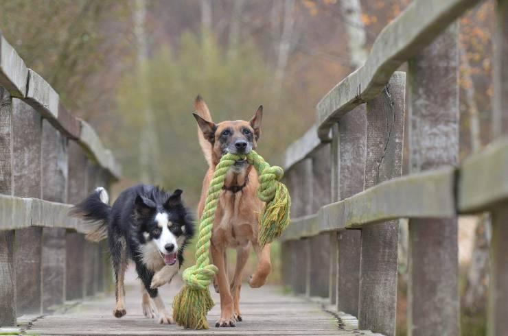 Cani in fuga per la libertà (Foto Pixabay)