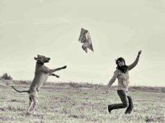 Cane e padrone insieme (Foto Pixabay)