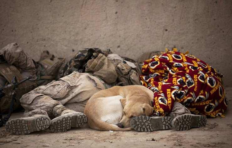 cane con i soldati (Foto Pixabay)