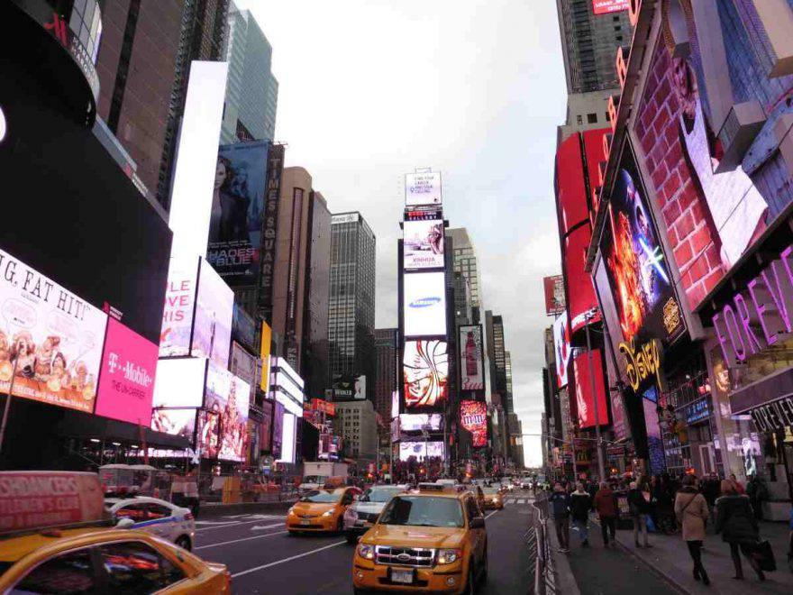 koala new york