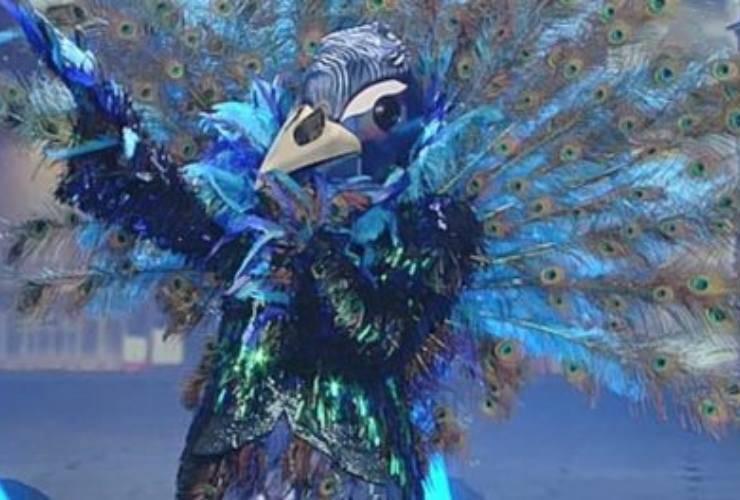 pavone-cantante-mascherato