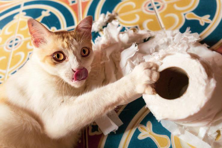 pica nel gatto
