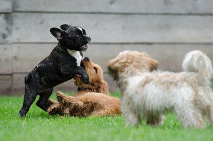 cane dominante o sottomesso