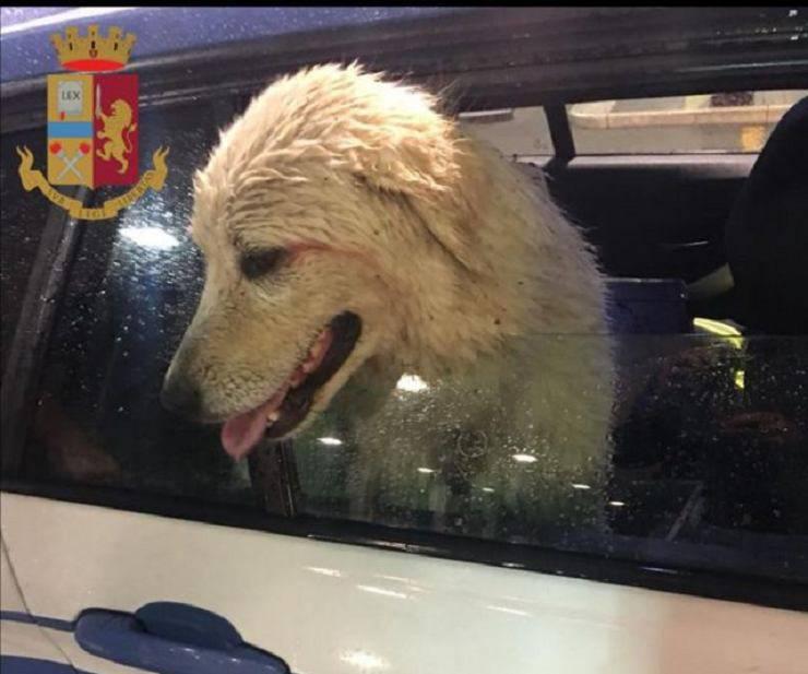 rapisce cane riscatto