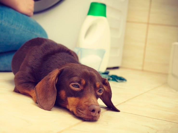 prodotti che possono causare cancro al cane