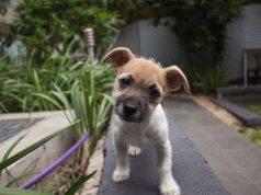 come farsi ubbidire dal cane