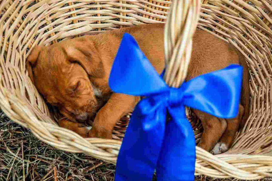 cani abbandonati per strada regalati