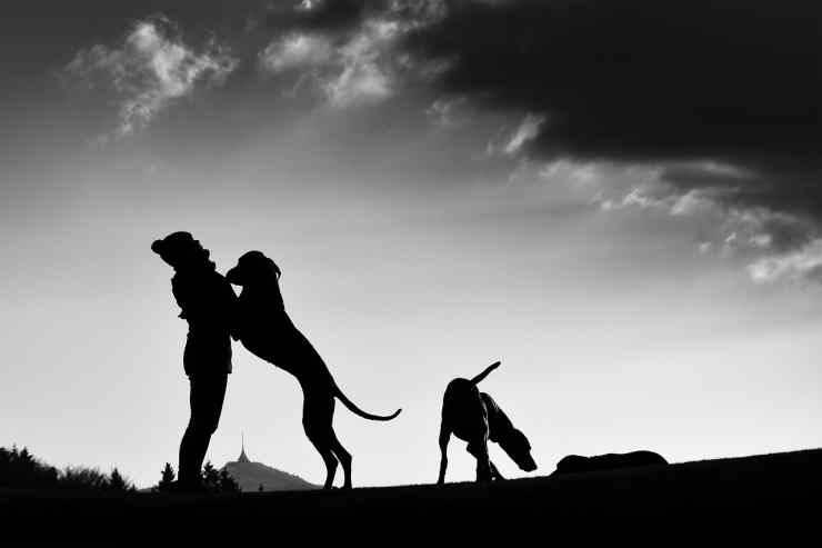 Cane fa festa alla padrona (Foto Pixabay)