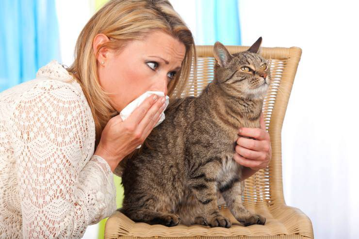 sintomi allergia gatto