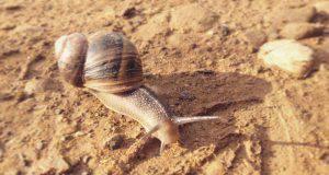 Animali più lenti del mondo
