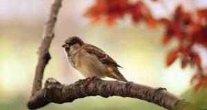 Uccello sul ramo (Foto Pixabay)