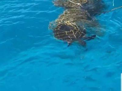 Tartaruga marina nella rete da pesca