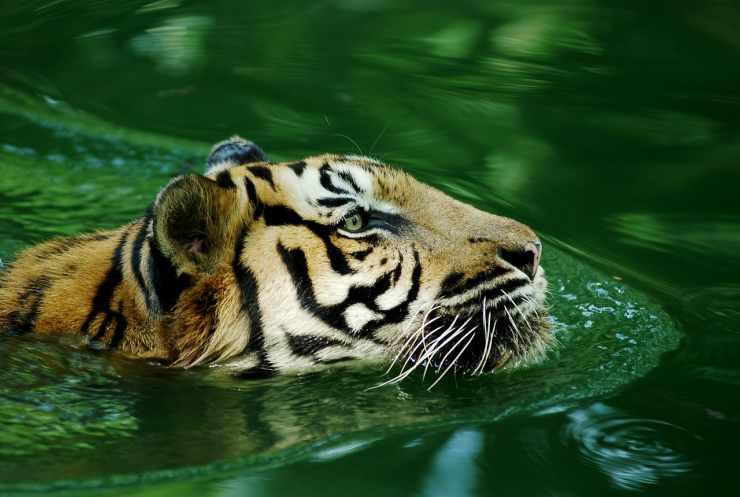 Creatura meravigliosa (Foto Pixabay)