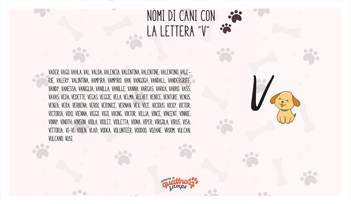 infografica nomi cane con la V