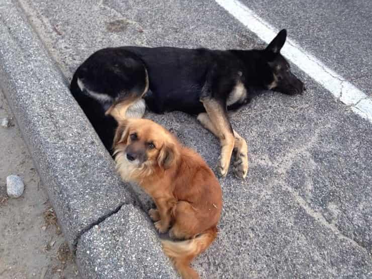 Cani ciglio strada