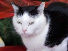 gatto più scontroso al mondo