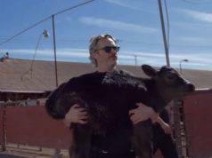 joaquin phoenix mucca vitello
