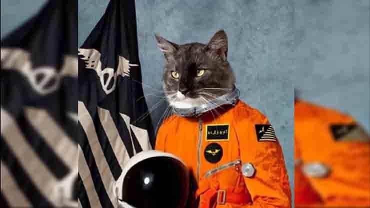 10 animali astronauti