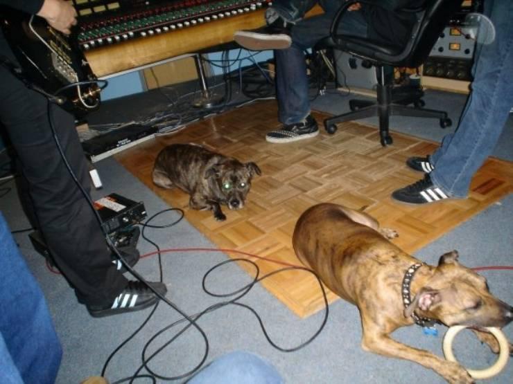 band cani metal