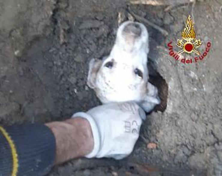 cane in pericolo intrappolato