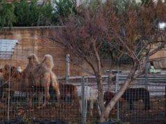 zoo abusivo animali esotici