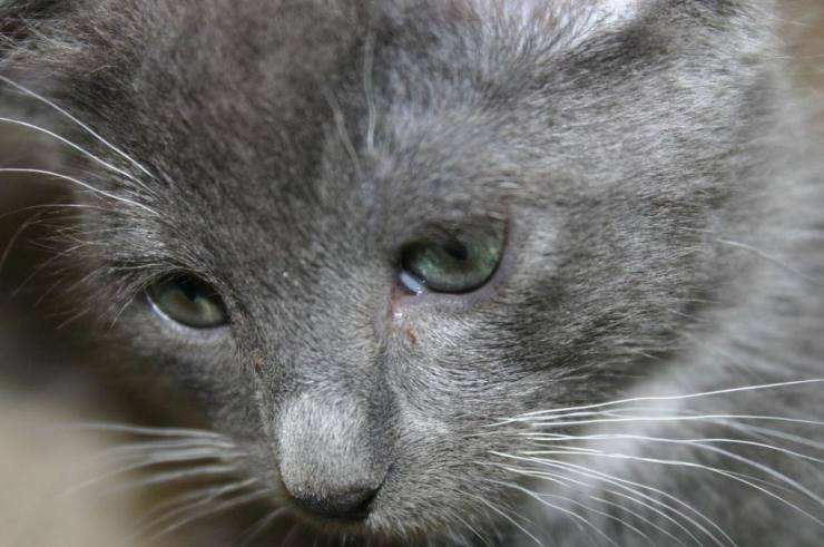 gatto protesi