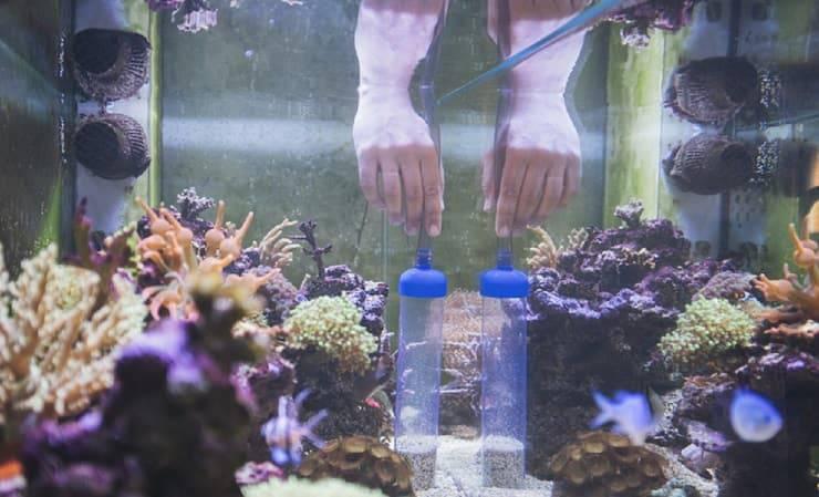 Manutenzione ordinaria acquario acqua dolce