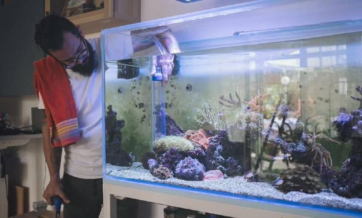 Manutenzione ordinaria acquario marino