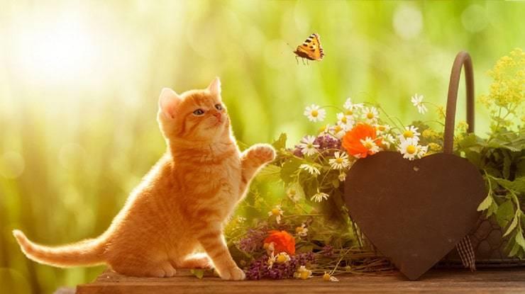 Omeopatia per gatti