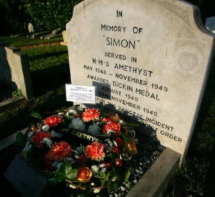 gatti famosi tomba Simon