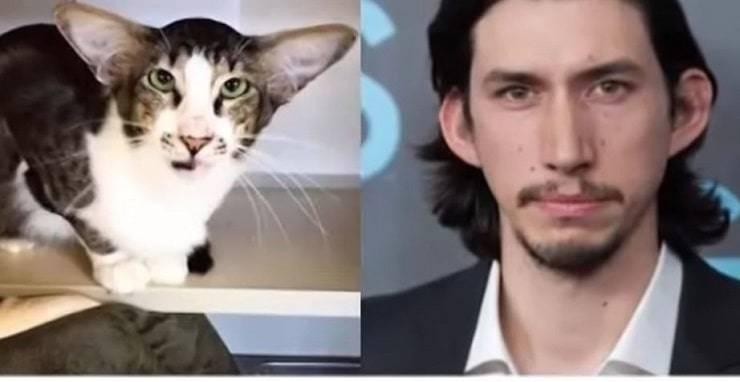 Animali che somigliano a personaggi famosi