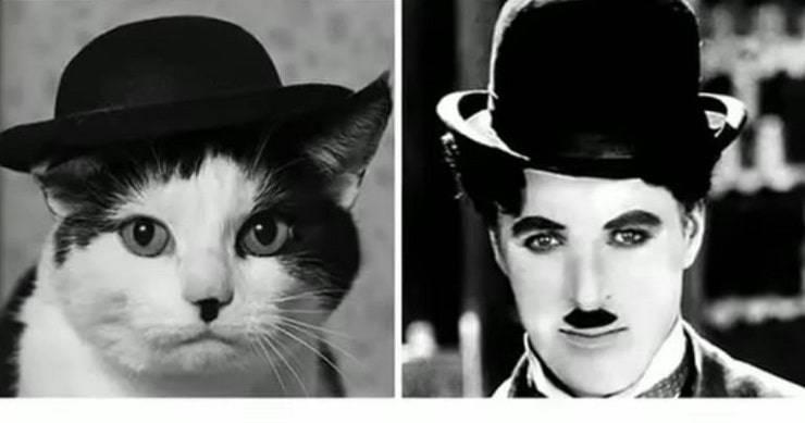 Chaplin-Gatto