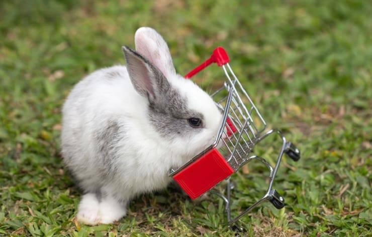 Quanto costa mantenere un coniglio