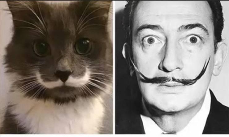 Dalì-Gatto