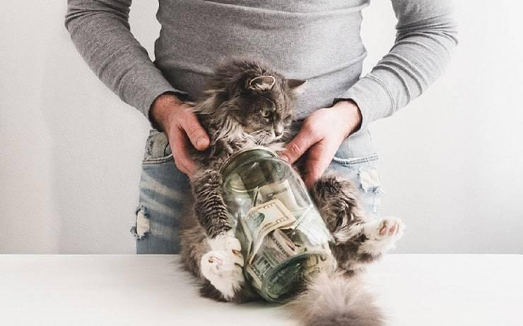Come il gatto spiega