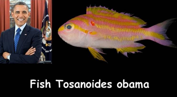 Animali e personaggi famosi il pesce Obama