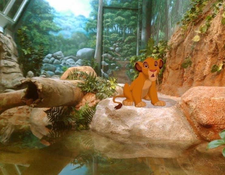 Animali Disney nel mondo Re Leone