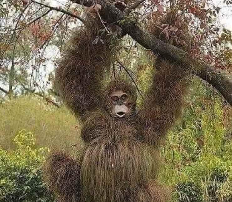 siepi animali Scimpanzé
