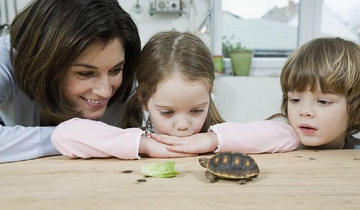 Nomi per tartarughe