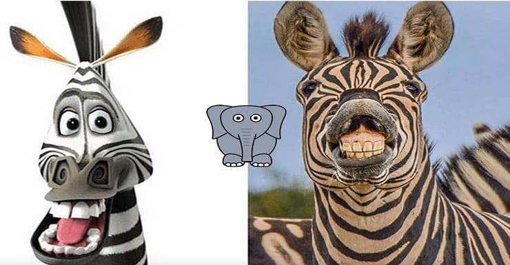marty la zebra