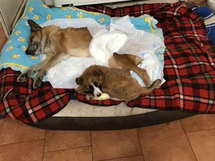 Il cane Lazzaro e il suo amico (Foto Facebook)
